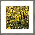 Narcissus And Grasses Framed Print