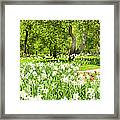 Narcissus In Apple Garden Framed Print