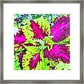 Natural Abstraction Framed Print