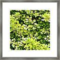 Natural Background With Small Yellow Green Leaves. Framed Print