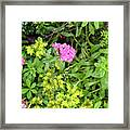 Natural Background With Vegetation And Purple Flowers. Framed Print