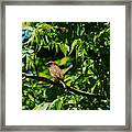 Natural Insect Repellant Framed Print