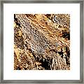 Natural Textural Abstract Framed Print