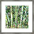 Nature Green Background Framed Print