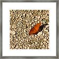 Nature In The Wild - A Splash Of Color On The Rocks Framed Print