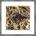 Nature In The Wild - Beauty Camouflaged Framed Print