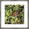 Nature In The Wild - Colors Of Autumn Framed Print