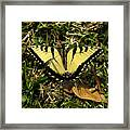 Nature In The Wild - Splendor In The Grass Framed Print