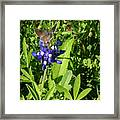 Nature In The Wild - Those Sweet Blues Framed Print