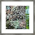Nature Painted Tree Bark Framed Print