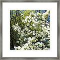 Nature Tree Landscape Art Prints White Dogwood Flowers Framed Print
