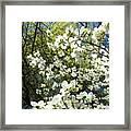 Nature Tree Landscape Art Prints White Dogwood Flowers Framed Print