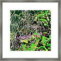 Nature's Way Framed Print by Eikoni Images