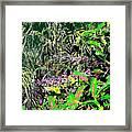 Nature's Way Framed Print