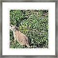 Nebraska Prairie Dog Framed Print