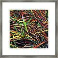 Needles Of Color Framed Print