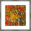 New England Sugar Maples Framed Print