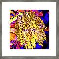 Night Bloom Framed Print