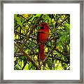 Northern Cardinal Work Number Two Framed Print