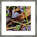 Northern Water Snake Framed Print