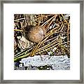 Nuts Framed Print