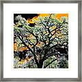 Oak Oasis Framed Print