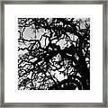 Oak Tree In Winter Detail - Amador County, California Framed Print