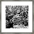 Oak Tree Light Framed Print