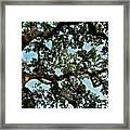 Oak Tree Three Framed Print