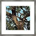 Oak Tree Two Framed Print