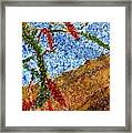Ocotillo In Bloom Framed Print