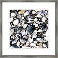 Ocracoke Shells Framed Print