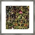 October Rose Framed Print