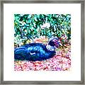 Odd Looking Duck In Swansboro Nc 3 Framed Print