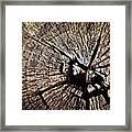 Old Dry Stump Framed Print
