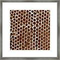 Old Honey Comb Bee Hive  Framed Print