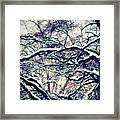 Old Tree 3 Framed Print