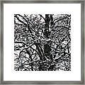Old Tree 5 Framed Print