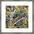Old Yellow Birch Framed Print