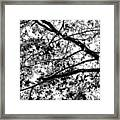 On And Limb And A Prayer Framed Print