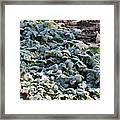 One Frosty Morning Framed Print