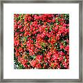 Orange And Colral-pink Flowers 2 Framed Print