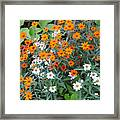 Orange And White Framed Print