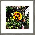 Orange And Yellow Flower Framed Print