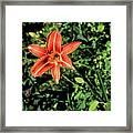 Orange Day Lily 1 Framed Print