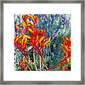 Yellow-orange Kangaroo Paws At Pilgrim Place In Claremont-california- Framed Print