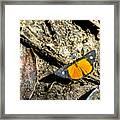 Orange Patch Framed Print