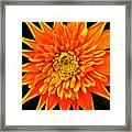Orange Star Flower Framed Print