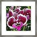 Orchid Hanging In Palms Framed Print