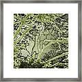 Oriental Garden Framed Print